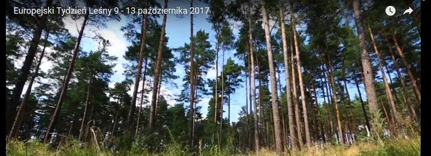 IV Europejski Tydzień Leśny